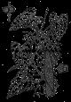 Shan yao